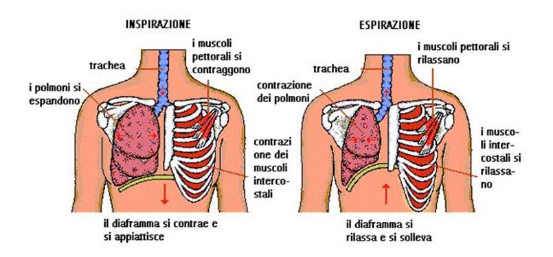 respiraziione diaframmatica